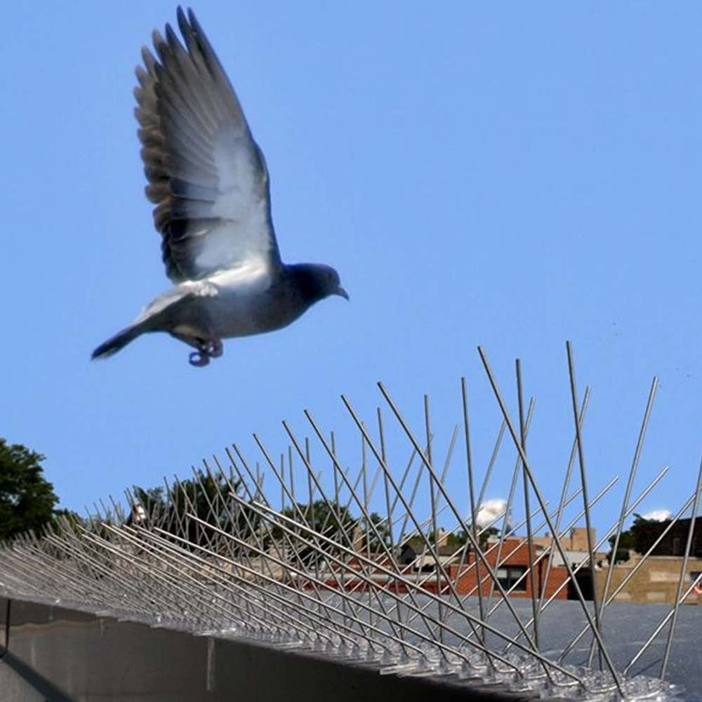 buy bird spikes to stop pigeons